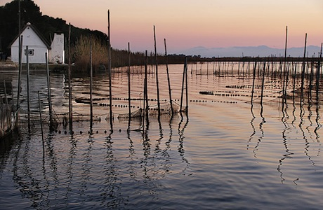 Albufera Bike Tour